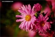 m3_128849_blume_fb.jpg