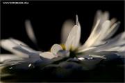 m3_128946_blume_fb.jpg