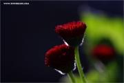 m3_128958_blume_fb.jpg