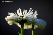 m3_128962_blume_fb.jpg