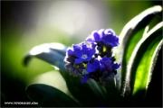 m3_128969_blume_fb.jpg
