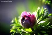m3_128981_blume_fb.jpg
