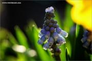 m3_128990_blume_fb.jpg