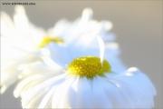m3_128995_blume_fb.jpg