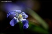 m3_129071_wald_fb.jpg