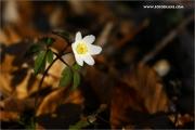 m3_129136_wald_fb.jpg