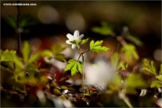 m3_129144_wald_fb.jpg