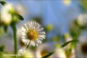 m3_129773_blume_fb.jpg