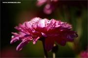 m3_129929_blume_fb.jpg