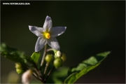 m3_131999_blume_fb.jpg