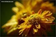 m3_132127_blume_fb.jpg