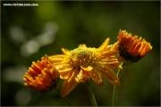 m3_132141_blume_fb.jpg