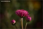 m3_132158_blume_fb.jpg