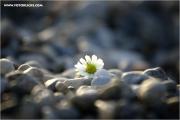m3_133028_blume_fb.jpg