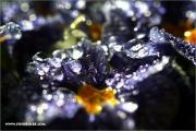 m3_133060_primel_fb.jpg