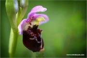 m3_138547_orchidee_fb.jpg