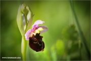 m3_138554_orchidee_fb.jpg