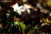 m3_139139_waldboden_fb.jpg