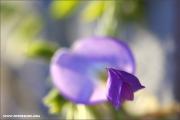 m3_144688_blauregen_fb.jpg