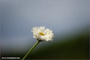 m3_146695_gaenseblu_fb.jpg