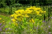 m3_146733_wind_fb.jpg