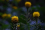m3_148200_blume_fb.jpg
