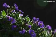m3_813046_blaue_fb.jpg