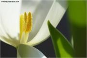 m3_814023_tulpe_fb.jpg