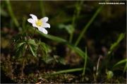 m3_814456_anemone_fb.jpg