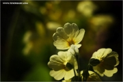 m3_814476_blume_fb.jpg
