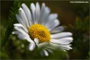 m3_817705_blume_fb.jpg