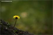 m3_818096_blume_fb.jpg