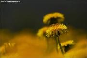 m3_818397_butterblume_fb.jpg
