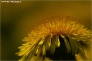 m3_818400_bublume_fb.jpg