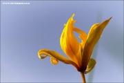 m3_818437_witulpe_fb.jpg