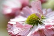 m3_818641_blume_fb.jpg