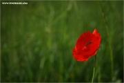 m3_820137_mohn_fb.jpg