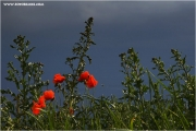 m3_821351_mohn_fb.jpg