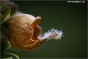 m3_824965_pflanze_fb.jpg