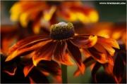 m3_825141_blume_fb.jpg