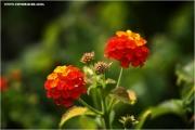 m3_830456_blume_fb.jpg
