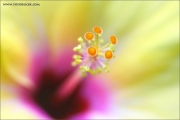 m3_917538_blume_fb.jpg