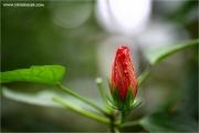 m3_917809_blume_fb.jpg