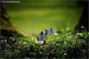 m3_918298_blume_fb.jpg
