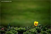 m3_918674_bluem_fb.jpg
