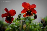 m3_918676_blume_fb.jpg