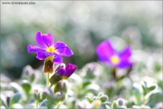 m3_919879_blau_fb.jpg