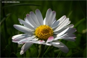 m3_919976_bluem_fb.jpg