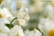 m3_922395_blume_fb.jpg