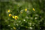 m3_923450_blume_fb.jpg